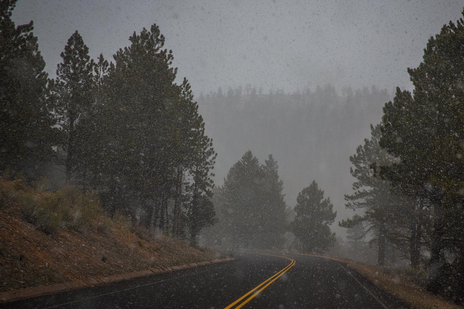 bolfo_0004s_0001_Snow in Bryce