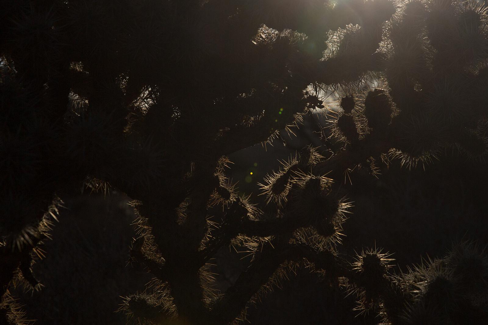 bolfo_0006s_0008_Joshua Tree