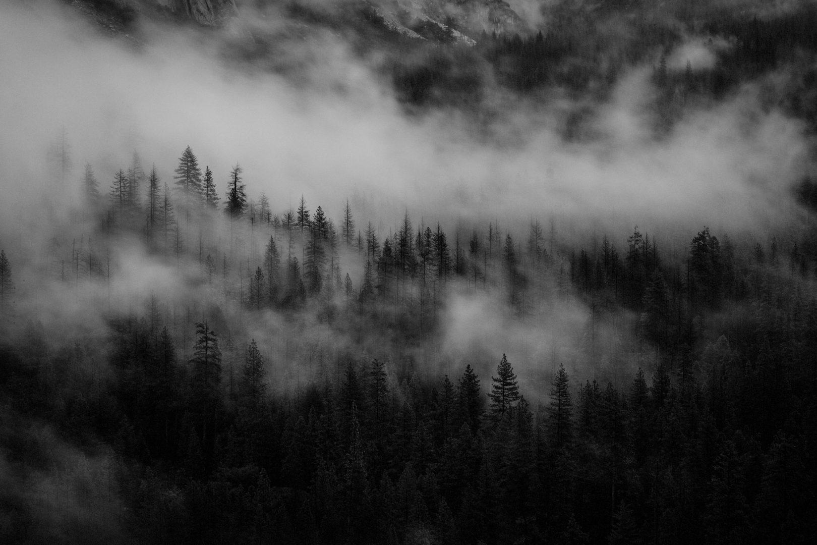 Got wood, Yosemite